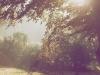 Morgensol på gården